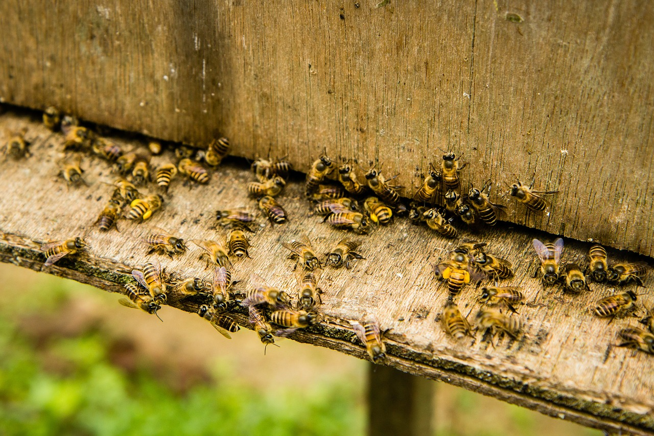 bees-139606_1280