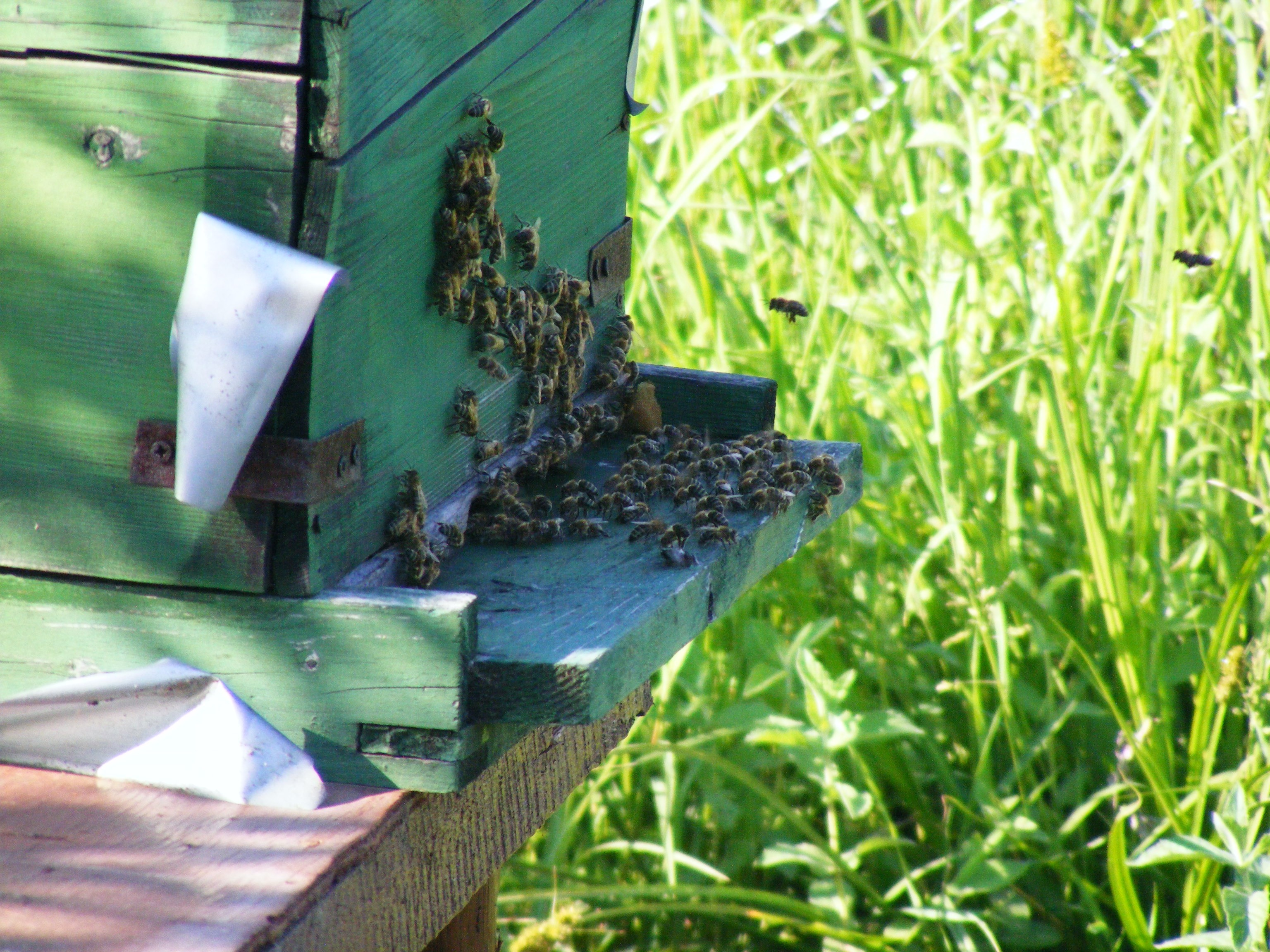 bees-88241