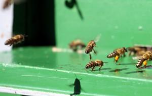 hive-2821_1280