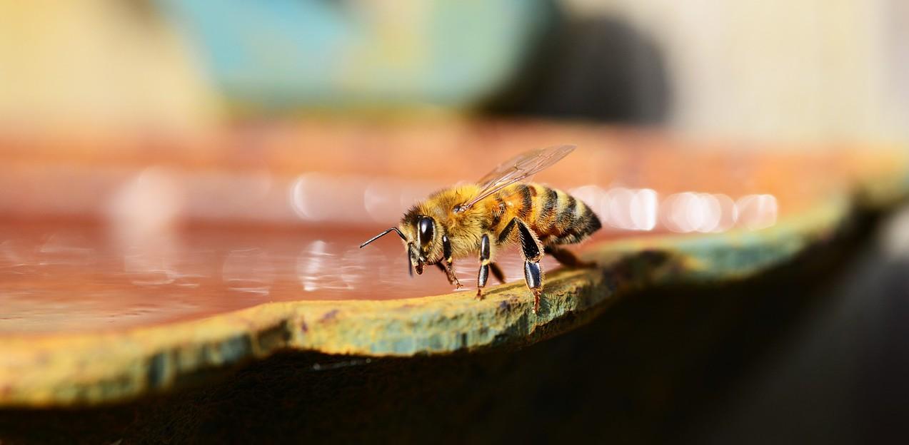 honey-340620_1280
